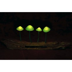 Psychedelic Lamp (Green)