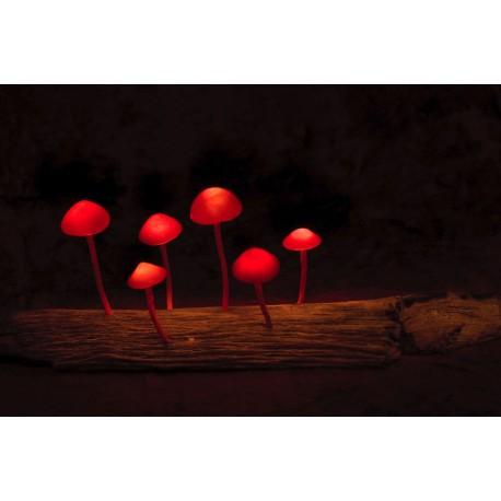 Psychodelická lampička (červená 2)